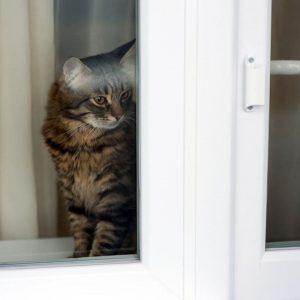 фото котик сидит на окне